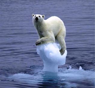 Polar Bear | Global Warming